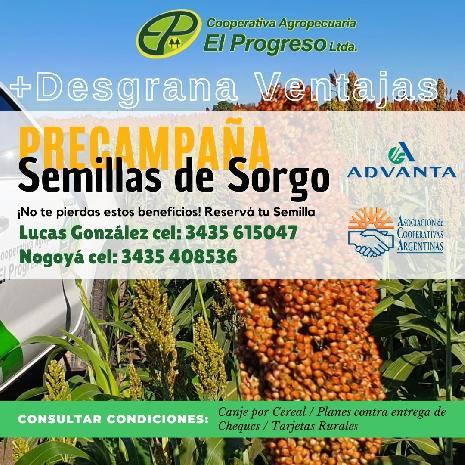 <h3><a href='http://caelprogreso.com.ar/novedades/#123' title='Semillas Sorgo'>Semillas Sorgo</a></h3><span>...</span>